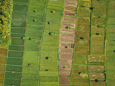 Indonesia, Bali, Candidasa, Aerial view of rice fields - p300m2059379 by Konstantin Trubavin