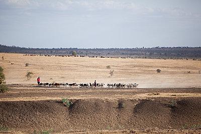 Schafherde in der Serengeti - p842m939644 von Renée Del Missier