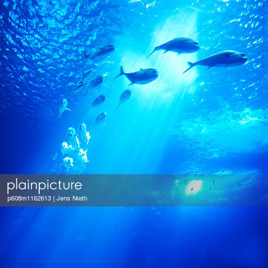 Aquarium - p608m1162613 von Jens Nieth