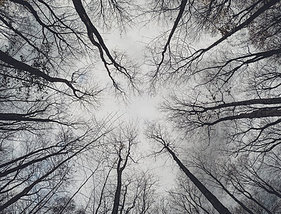 Looking up at bare branches of tree canopy from the ground - p1166m2071967 by Cavan Images