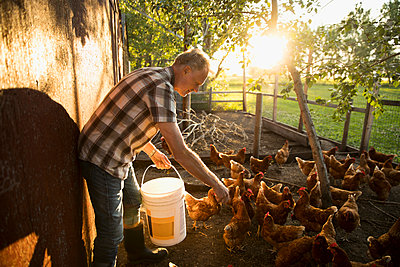 Male farmer feeding chickens in chicken coop - p1192m1493192 by Hero Images