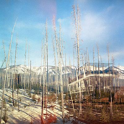 Winter - p4161892 by Sarah Johanna Eick