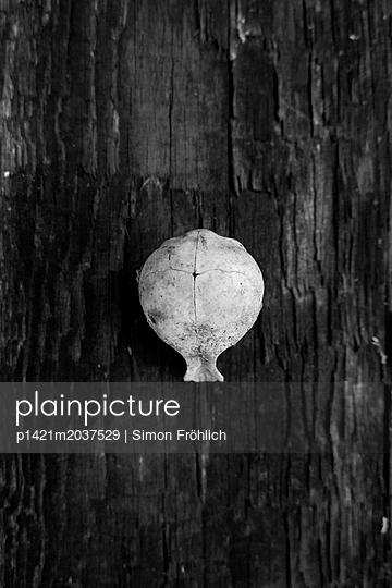 Skull - p1421m2037529 von Simon Fröhlich