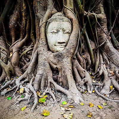 Thailand, Ayutthaya, head of sandstone Buddha between tree roots at Wat Mahathat - p300m1166319 by Giorgio Fochesato