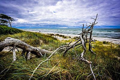 Germany, Mecklenburg-Western Pomerania, Zingst, beach - p300m2058775 by Kontrastlicht