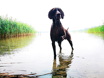 Dog at the lake - p551m1582909 by Kai Peters