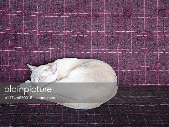 Katze - p1174m990015 von lisameinen