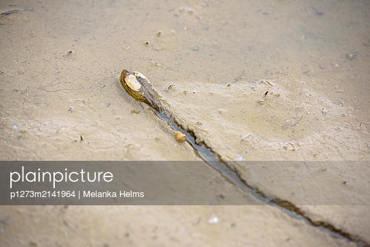 Flußmuschel - p1273m2141964 von Melanka Helms