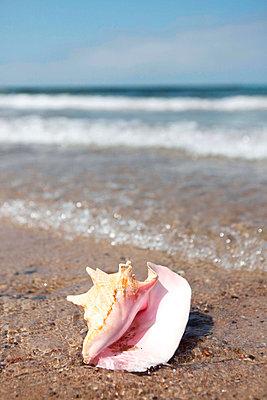 Surf - p045m823555 by Jasmin Sander