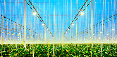 Bell pepper greenhouse - p1132m1071994 by Mischa Keijser