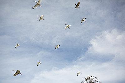 Vögel am Himmel - p1308m2057119 von felice douglas
