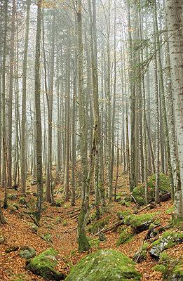 Herbstwald - p2770049 von Dieter Reichelt