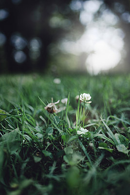 Surface level of flowers growing on field - p1166m1182785 by Cavan Images