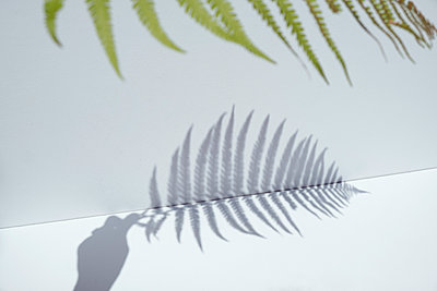 Schatten von einem Farnblatt - p1190m2110976 von Sarah Eick