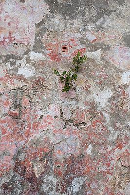 Wand - p954m1048503 von Heidi Mayer