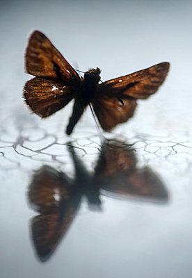 Butterfly - p971m740863 by Reilika Landen