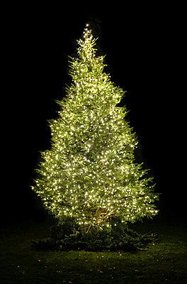 Weihnachtsbaum  - p1237m2124999 von Paul W. Nähr