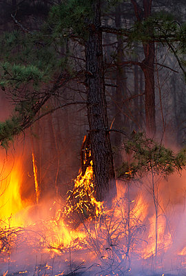 Forest fire - p5756424f by Halling, Sven