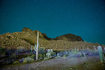 Starry night over cactus filled desert in Tucson; Arizona; USA - p301m844147f by Brian Caissie