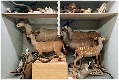 Tiere - p1205m1020916 von Annet van der Voort