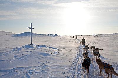 Norway, Finnmark Region. Dog sledding in the Arctic Circle - p6521449 by Mark Hannaford