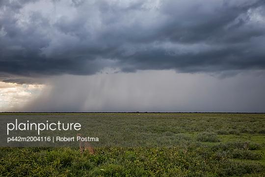 p442m2004116 von Robert Postma