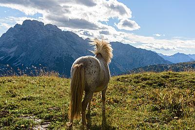 Pony schaut in die Ferne, Trentino, Belluno - p1273m1198514 von melanka