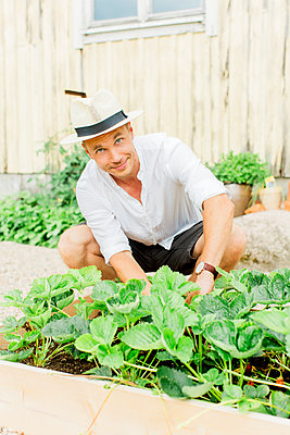 Man working in garden - p312m2050133 by Alicia Swedenborg