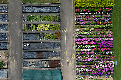 Test area; flowers - p356m851275 by Stephan Zirwes
