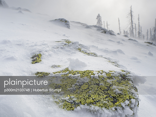 Germany, Bavaria, Bavarian Forest, Lusen, boulder with lichen in winter - p300m2103748 by Hubertus Stumpf