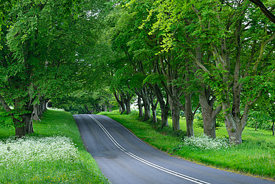 Great Britain, England, Dorset, Beech tree lined road - p300m2081399 by Martin Rügner