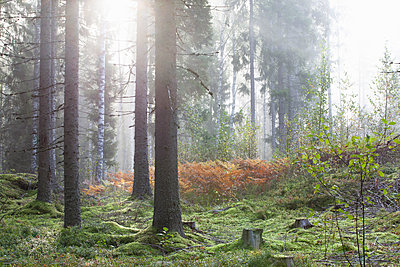 Tranquil scene in forest - p429m2145512 by Tiina & Geir