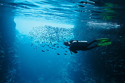 Woman scuba diving underwater among school of fish, Vava'u, Tonga, Pacific Ocean - p1023m2024441 by Martin Barraud