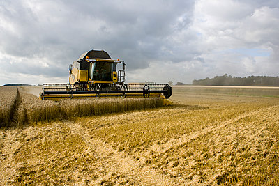 Corn harvest - p1057m1440418 by Stephen Shepherd