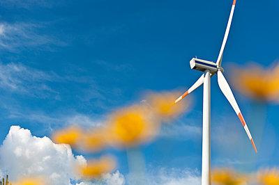 Flowers against wind turbine - p1079m1042135 by Ulrich Mertens