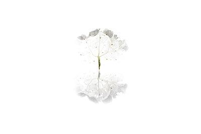Réflexion - p1469m1531823 by Anna Shumanskaia