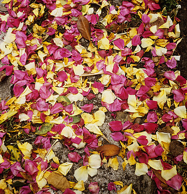 Petals on the ground - p7090005 by Axel Kohlhase