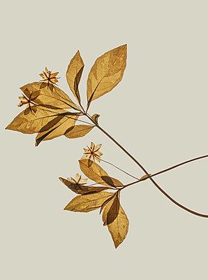 Wilted plants - p971m2087103 by Reilika Landen