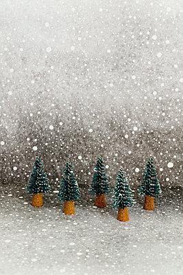 Fünf kleine Tannenbäume - p451m2141797 von Anja Weber-Decker