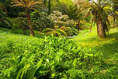 Glendurgan Gardens, Falmouth, Cornwall, England - p651m2032916 by Tom Mackie