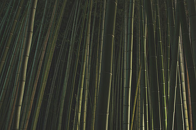 Illuminated bamboo grove at night in Arashiyama, Kyoto Japan - p798m1007809 by Florian Loebermann
