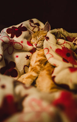 Kitten sleeping on a blanket at home - p300m1206392 by Ramon Espelt