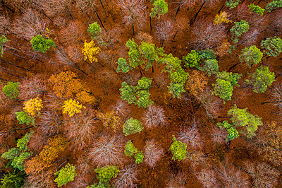 Germany, Baden-Wuerttemberg, Swabian Franconian forest, Aerial view of forest in autumn from above - p300m2070835 by Stefan Schurr
