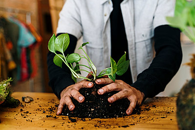 Hands of man preparing kokedama plant on table at home - p300m2273491 by VITTA GALLERY