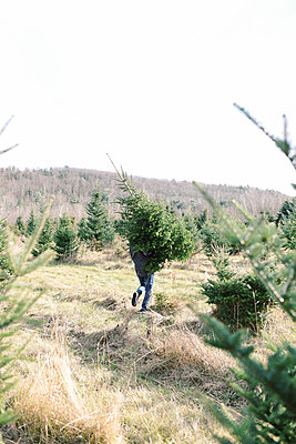 Finding the right Christmas tree. - p1166m2153968 by Cavan Images
