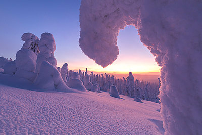 Sunrise on frozen trees, Riisitunturi National Park, Posio, Lapland, Finland - p651m2033210 by Roberto Moiola