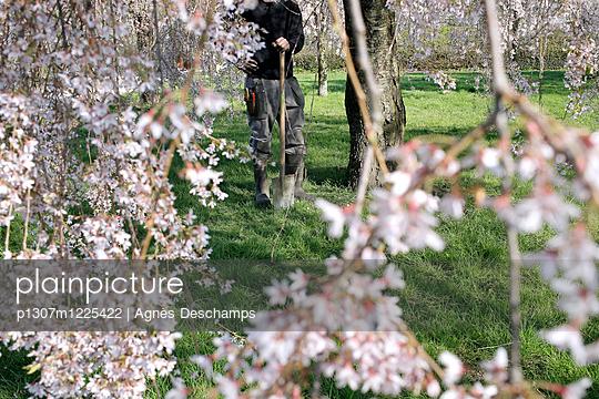 The Gardener  - p1307m1225422 by Agnès Deschamps