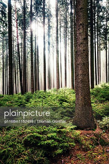 Thüringer Wald - p1168m1152499 von Thomas Günther