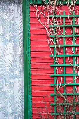 grünes Spalier an roter Datsche - p1079m1552909 von Ulrich Mertens