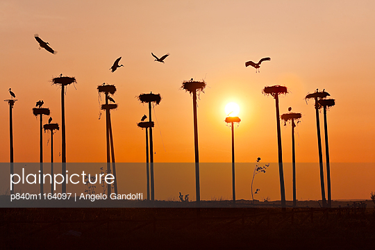 p840m1164097 von Angelo Gandolfi